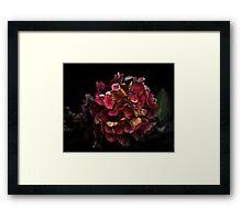 Don't Buy Me Flowers When I'm Dead Framed Print