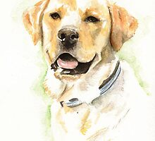 Labrador portrait by Ally Tate