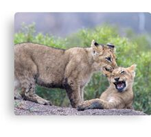 Ow ! Watch The Teeth ! Canvas Print