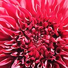 Dahlias In Bloom by Jeri Garner