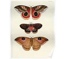 Exotic butterflies of the three parts of the world Pieter Cramer and Caspar Stoll 1782 V1 0289 Poster