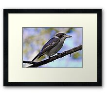 Grey Butcher Bird Framed Print