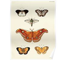 Exotic butterflies of the three parts of the world Pieter Cramer and Caspar Stoll 1782 V2 0193 Poster