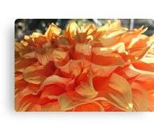 Peach Petals Canvas Print