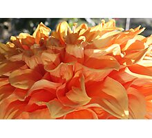 Peach Petals Photographic Print