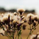 wild flowers by Elie Le Goc