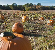 Picture a Pumpkin Posing - Rhode Island - US by Jack McCabe