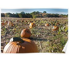 Picture a Pumpkin Posing - Rhode Island - US Poster