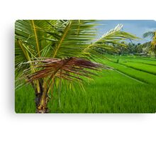 Palm and Paddy Canvas Print