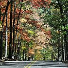 Road To Autumn by Gretchen Dunham