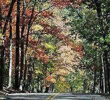 Road To Autumn by Gretchen Dunham