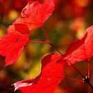 Autumn light by gracetalking