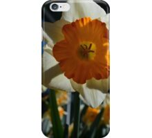 beautiful golden and white daffodil flower. iPhone Case/Skin