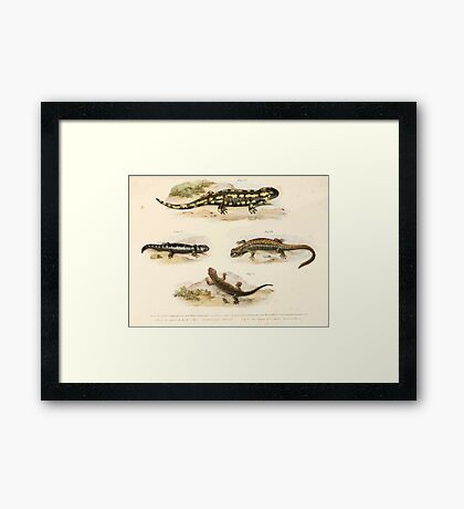 Leopold Joseph Fitzinger 1867 0211 Picture Atlas for popular scientific natural history of vertebrates Framed Print