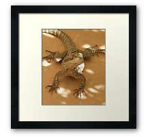 Wonderful Reptile Framed Print