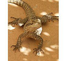 Wonderful Reptile Photographic Print