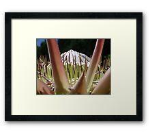 Arrowhead Framed Print