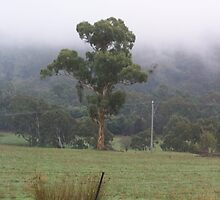 A tree stands tall, amongst the mist Strath Creek Vic Australia by Margaret Morgan (Watkins)