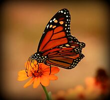 Monarch Beauty by Brenda Burnett