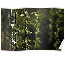 Trees in the light after the rains Poster