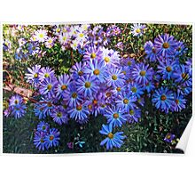 Cypress Gardens - Fall Flowers Poster