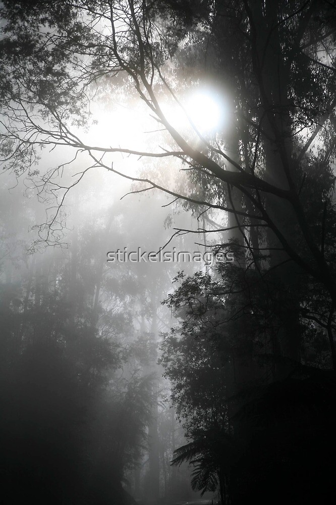 mist in the forest by stickelsimages