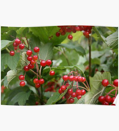 Berries - Wandsworth Common, London, UK Poster