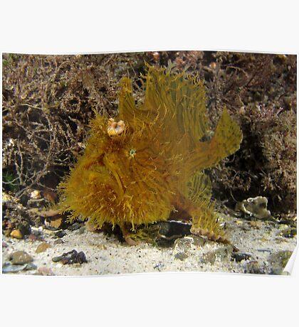 Swansea Anglerfish Poster