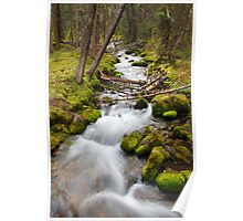 Creek in forest  Poster