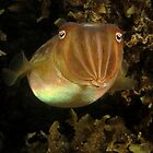 Swansea Cuttlefish by Matt-Dowse