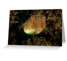 Swansea Cuttlefish Greeting Card