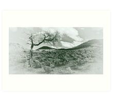 """lone tree""     outback south australia Art Print"