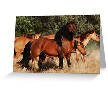 Chief and his mares Greeting Card