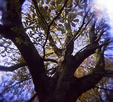 Tree climbing by polanri