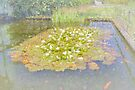 The Lily Pond by Elaine Teague