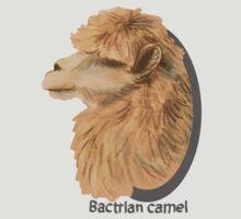 Bactrian Camel by Xantippe