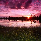 Lakeside flowers by Liza Yorkston