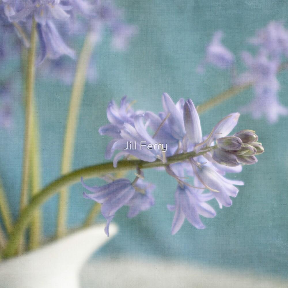 Bluebell by Jill Ferry
