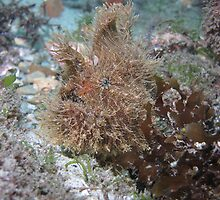 Swansea Angler Fish V.2 by Matt-Dowse