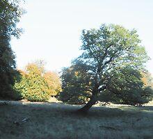 Grey plast free tree by HeklaHekla