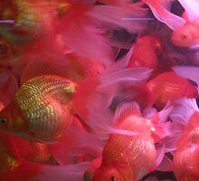 Fishface by hayleychard