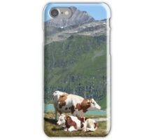 Dairy Cows High Up On A Mountain iPhone Case/Skin