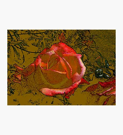 A Rose by any Name Photographic Print
