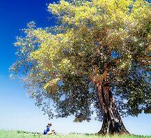 Knowledge Tree (photo) by James Zickmantel
