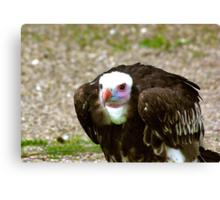 Ethel the Vulture Canvas Print