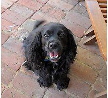 Lovely Lola. Photographic Print