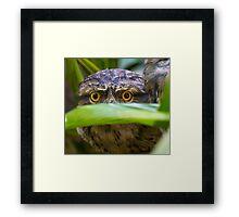 Peek -A- Boo -Tawny Frogmouth Framed Print