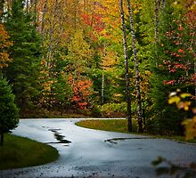 Autumn Drive by Charles Plant