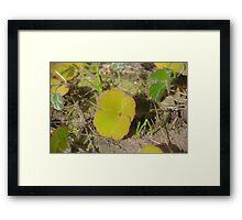 Nardoo Framed Print