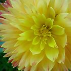 Double Yellow Dahlia by Betty Mackey
